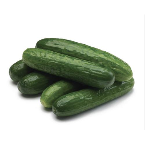 Mini Seedless Cucumbers 6 Pack